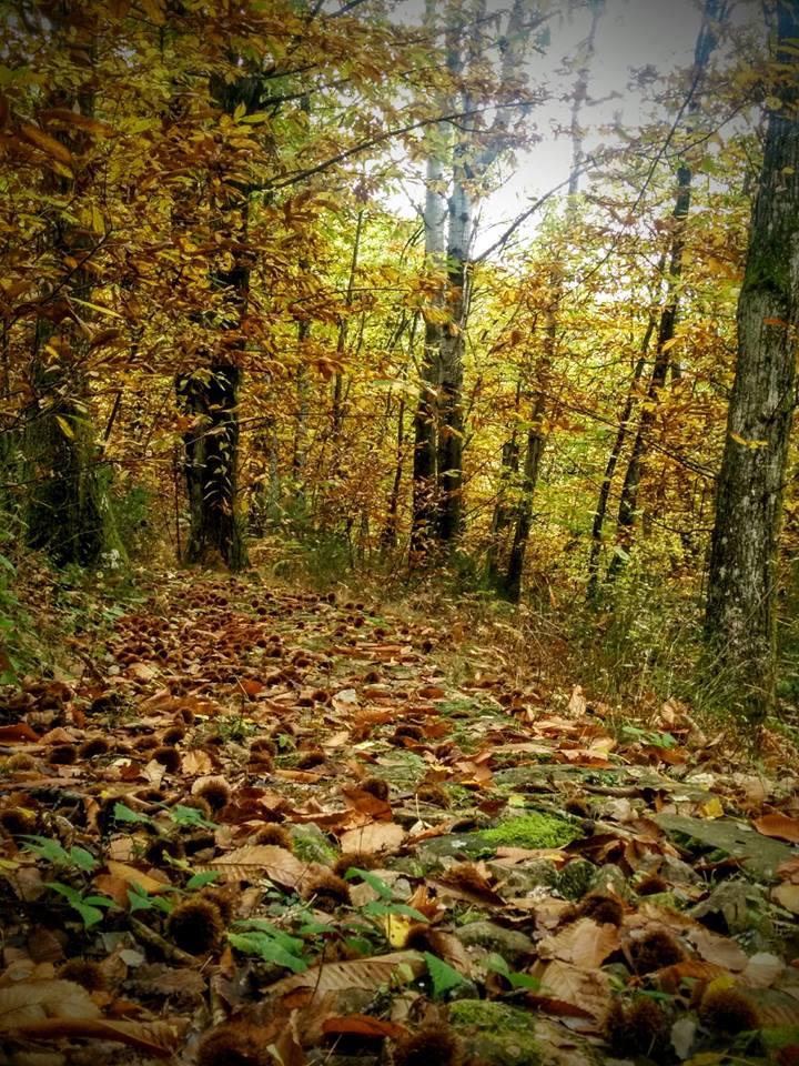 bosco parco didattico castagne