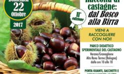 Raccolta Castagne: Dal bosco alla birra